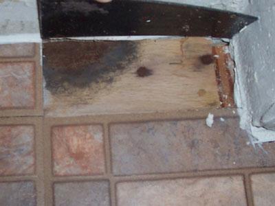 Mold Under Floor Tile